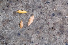 Nieżywi liście spadać na podłoga w cementowej ścieżce Obrazy Stock