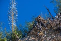 Nieżywi piękni drzewa Zdjęcia Royalty Free