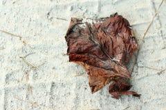 Nieżywy Brown liść Fotografia Stock