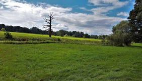 Nieżywy dębowy drzewo przy Rogalin wioski pałac Polska Zdjęcie Stock