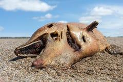 Nieżywy delfin kłama na wybrzeżu Fotografia Royalty Free