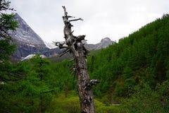 Nieżywy drewno i zielona dżungla Zdjęcia Royalty Free