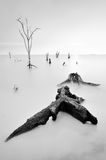 Nieżywy drewno na Kelanang plaży w czarny i biały Obrazy Royalty Free
