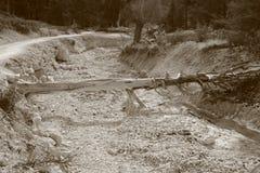 Nieżywy drewno w czarny i biały Obrazy Royalty Free