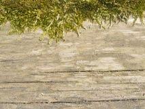 nieżywy drzewny bagażnik zdjęcia royalty free