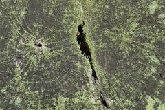 Nieżywy drzewny bagażnik przegniły w drewnie pełny ramowy szczegółu tło Zdjęcia Stock