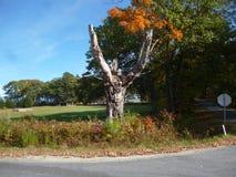 Nieżywy Drzewny róg ulicy fotografia royalty free