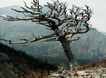 Nieżywy drzewo fotografia stock