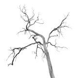 Nieżywy drzewo bez liści fotografia stock