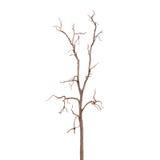 Nieżywy drzewo bez liści zdjęcie stock