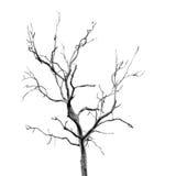 Nieżywy drzewo bez liści obrazy stock