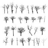 Nieżywy drzewo bez liści Vecto Zdjęcia Royalty Free
