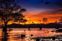Nieżywy drzewo morzem z pięknym ranku słońcem Obrazy Royalty Free