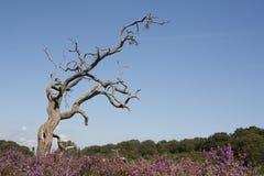 Nieżywy drzewo na cumującym Obraz Stock