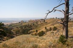 Nieżywy drzewo na grani przy fortu Robinson stanu parkiem, Nebraska zdjęcie stock