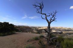 Nieżywy drzewo na krawędzi San Rafael pęcznienia Fotografia Royalty Free