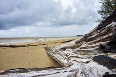 Nieżywy drzewo na plaży Fotografia Royalty Free