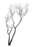 Nieżywy drzewo odizolowywający Fotografia Royalty Free