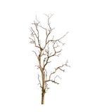 Nieżywy drzewo odizolowywający zdjęcie royalty free