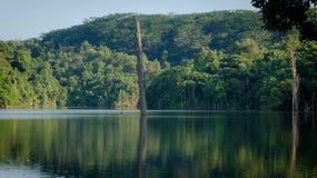 Nieżywy drzewo po środku jeziora Obraz Stock