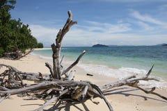 Nieżywy drzewo przy plażą | Koh Bulon Tajlandia Fotografia Stock