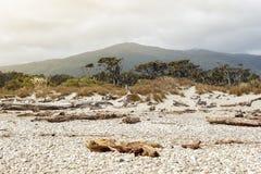 Nieżywy drzewo przynoszący na ląd przy Tauparikaka żołnierza piechoty morskiej rezerwą, Nowa Zelandia Obraz Stock