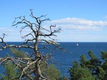 Nieżywy drzewo, samotna żaglówka obraz royalty free