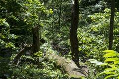 Nieżywy drzewo wśród utrzymania obrazy stock