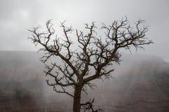 Nieżywy drzewo w Grand Canyon; mglista chmury i jaru ściana w tle obrazy royalty free