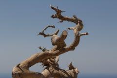 Nieżywy drzewo w ruinach średniowieczny Monolithos kasztel Obraz Royalty Free