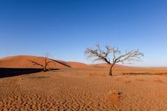 Nieżywy drzewo w Sossusvlei blisko Sesriem w sławnej Namib pustyni w Namibia, Afryka Obraz Royalty Free