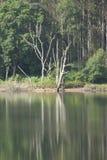 Nieżywy drzewo w wodzie Fotografia Royalty Free