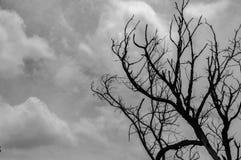 Nieżywy drzewo z nieba chmurnym tłem Obrazy Royalty Free