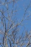 Nieżywy Gałęziasty abstrakt 01 Obrazy Stock