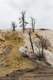 nieżywy gorący mamut skakać drzewa Fotografia Royalty Free