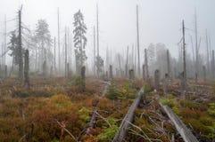Nieżywy Las Obraz Royalty Free