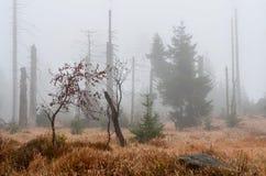 Nieżywy las Zdjęcie Royalty Free