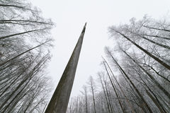 nieżywy lasowy drzewo Obrazy Royalty Free