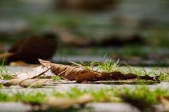 Nieżywy liść na drodze w parku Obraz Royalty Free