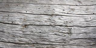 Nieżywy loricate sosny bagażnik Fotografia Stock