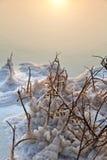 Nieżywy morze - Więdnący Bush przy świtem Zdjęcie Royalty Free