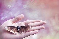 Nieżywy motyl w damy ręce, zielonej ziemi pojęcie Obrazy Stock