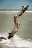 nieżywy pozyci wciąż drzewo Zdjęcie Royalty Free