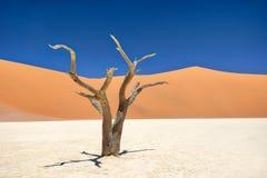 Nieżywy Vlei w Naukluft parku narodowym, Namibia, brać w Styczniu 2 zdjęcie stock