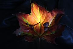 Nie jesień fotografia royalty free