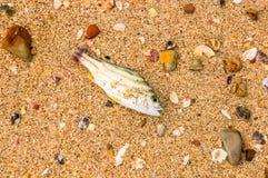 Nieżywa ryba Obraz Stock