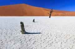 Nieżywi akacjowi drzewa w Sossusvlei niecce, Namibia Obraz Stock