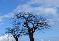 Nieżywi drzewa Fotografia Royalty Free