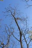 Nieżywi drzewa Obraz Stock