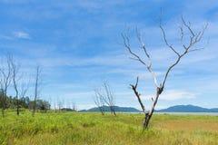Nieżywi drzewa Fotografia Stock
